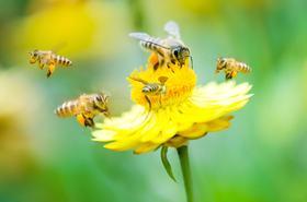 Des ruches au Symoresco